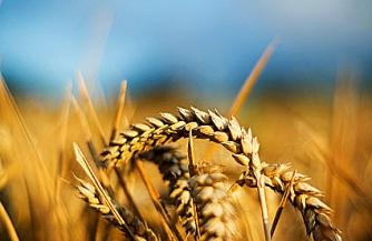 Аграрное возрождение