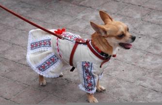 Украина в роли собаки