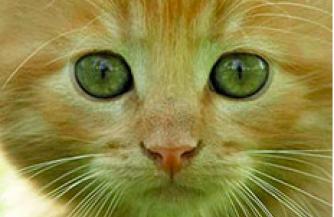 Наполнители для кошачьих туалетов. Что учесть при выборе?