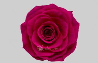 Что такое стабилизированные цветы?