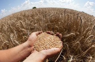 Хороший урожай — повод для санкций
