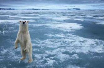 На смех белым медведям