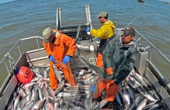 Плач рыбаков Аляски