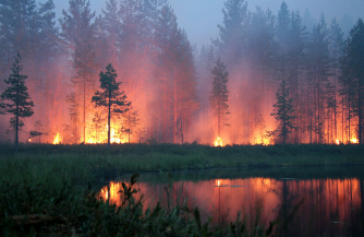 В ожидании лесных пожаров