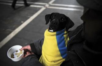 За долги забирают собак