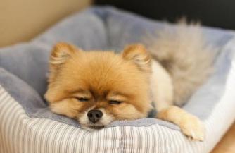 Породы собак с фото и названием: как выбрать верного питомца