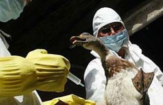 Глобальная эпидемия птичьего гриппа принесет колоссальный ущерб